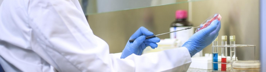 Media and Supplements